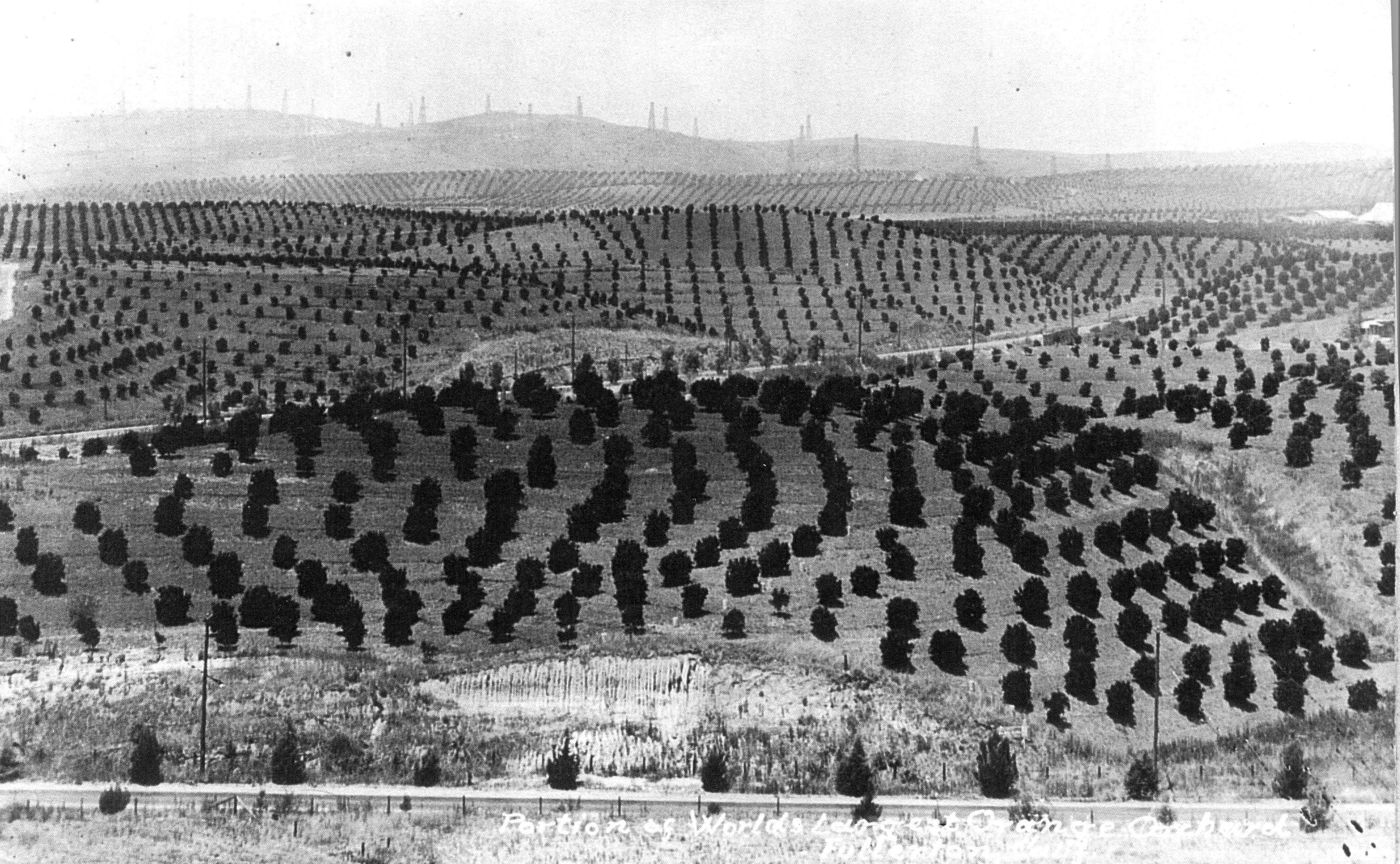 shown in the late 1920s is the bastanchury ranch citrus orchard then the largest in the world. Black Bedroom Furniture Sets. Home Design Ideas