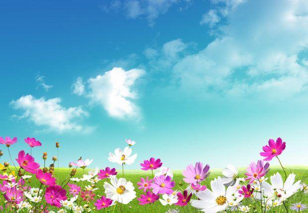 Desktop Spring Hd Wallpapers Photos Download New Papel De Parede Computador Flores Da Primavera Papel De Parede Flores April flores best and new hd wallpaper