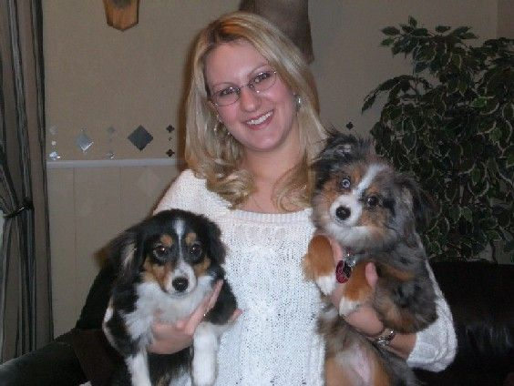 dogs of the gorge goldendale | Ashley's Aussies puppies are