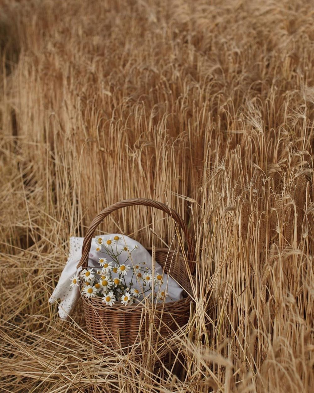 Pin by La Maison Naturaliste on A pin,a day,a story in