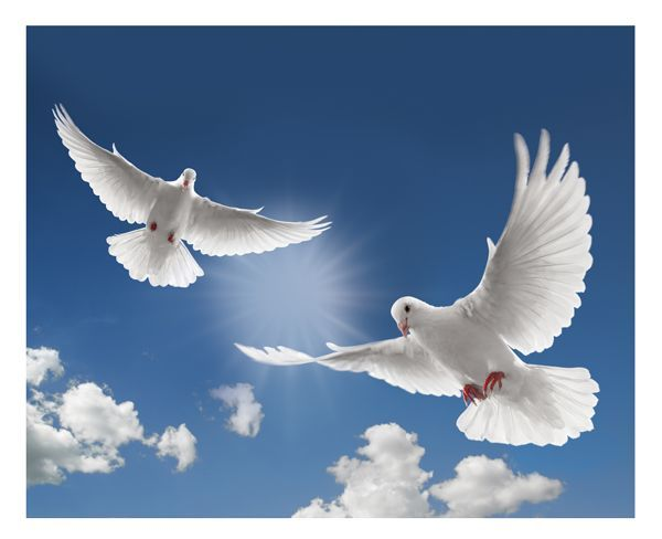 Flying Doves Christian Wallpapers Quotes Doves Christian Quotes
