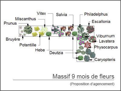 Kit de massif 9 mois de fleurs le massif sauge et massif - Bande de bruyere ...