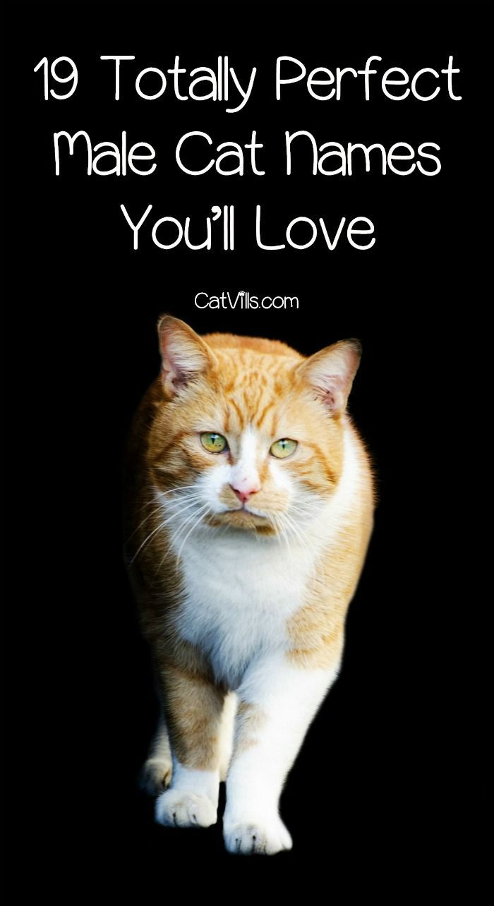 19 Totally Perfect Male Cat Names You Ll Love Catvills Cat Names Kitten Names Unique Cute Cat Names