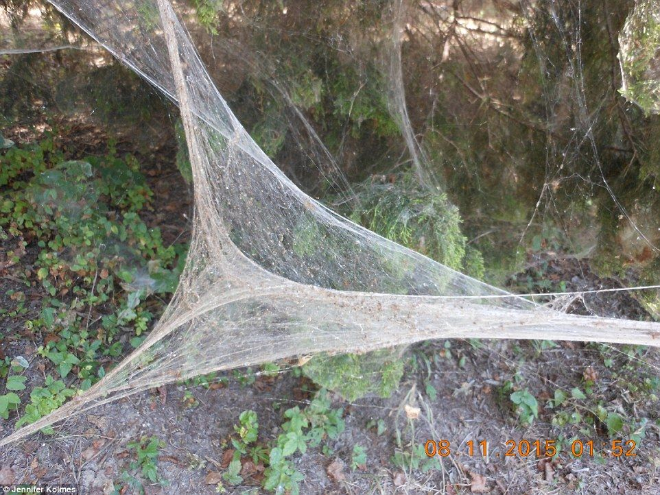Lake Tawakoni Spider Web