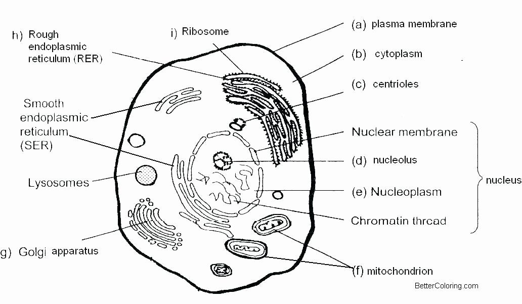 28 Animal Cell Coloring Page in 2020 | Plant cell diagram ...