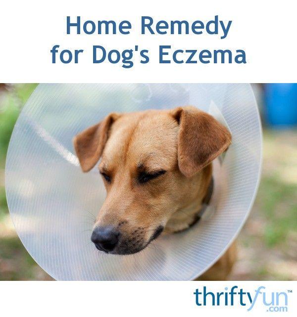 Home Remedy For Dog S Eczema Dog Eczema Dog Wound Dog Spay