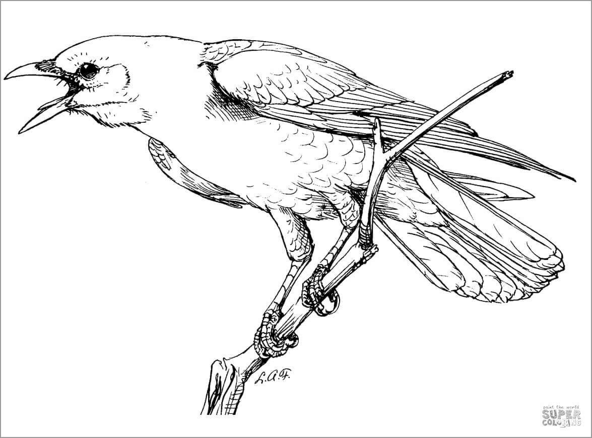 Realistic Perched American Crow Coloring Page In 2020 Bird