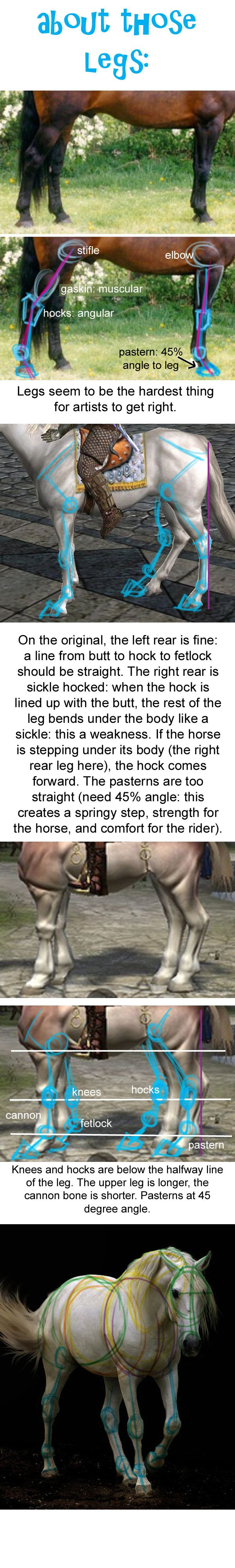 Animal Anatomy Horse Legs. | Animaux | Pinterest | Anatomía ...