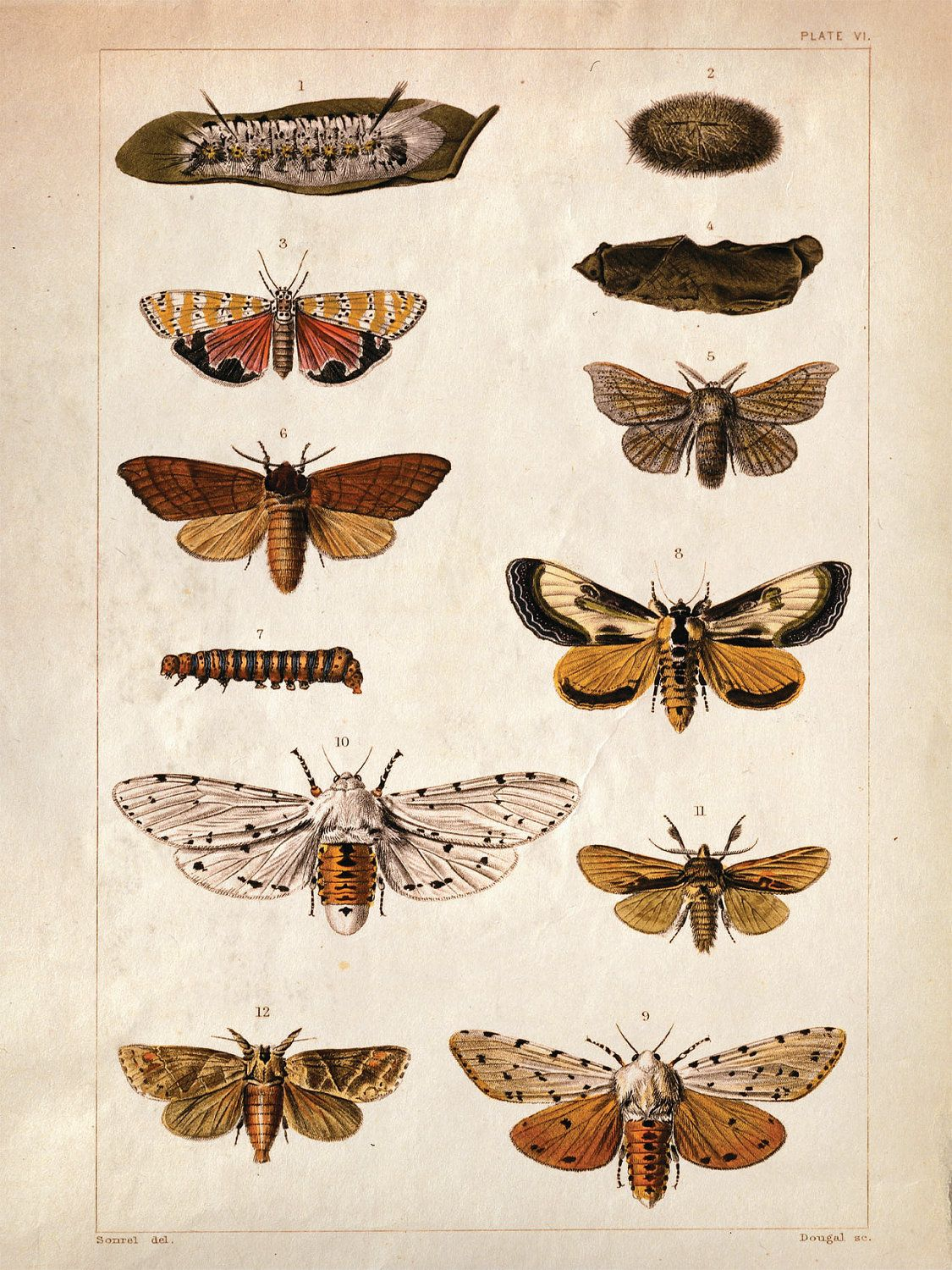 18x24 Vintage Science Plate Poster. Insects. Butterflies Moths- 087 ...