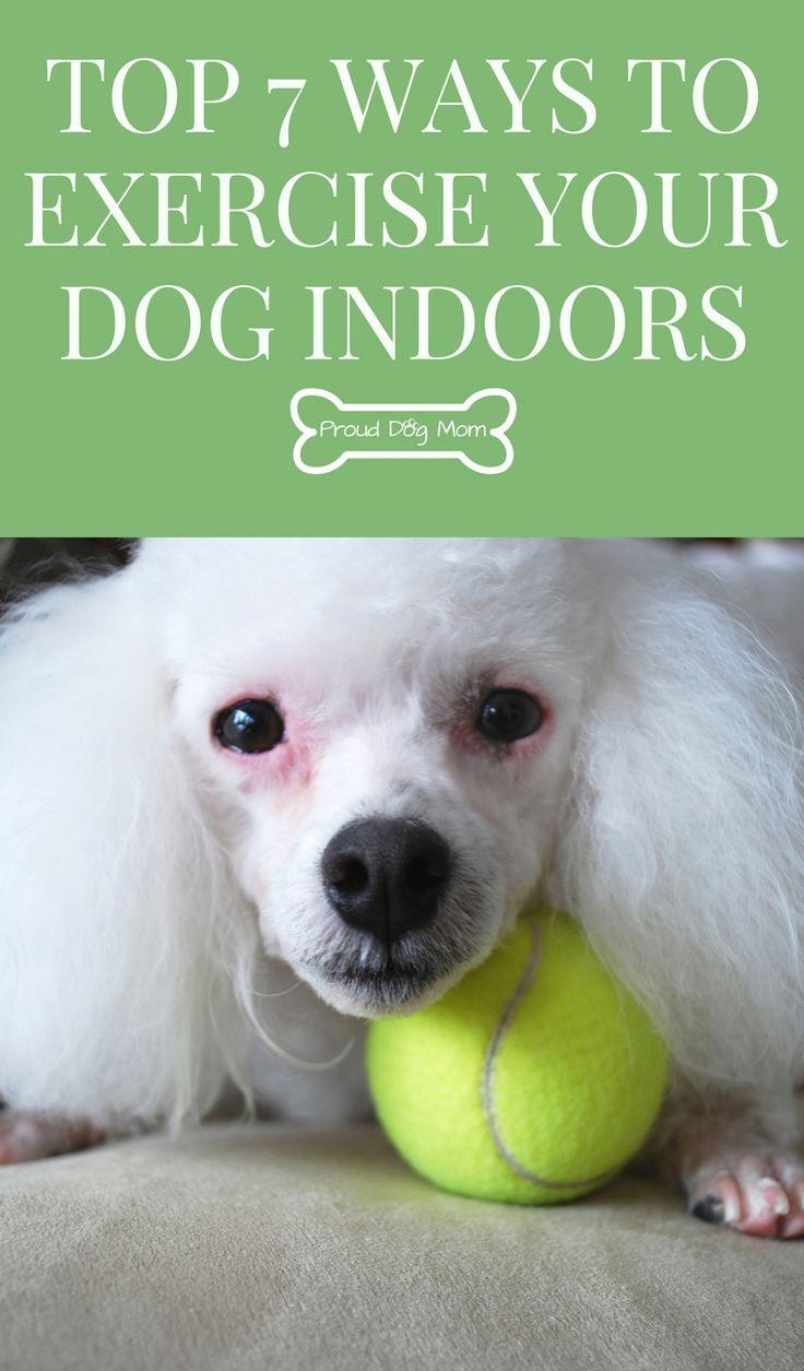 Obedience Dog Training Dallas Fort Worth Tx Http Redeemingdogs