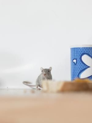 Farm To Table Activities Synonym Mice Repellent Getting Rid Of Mice Uses For Dryer Sheets