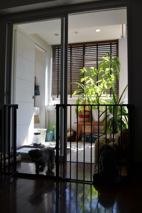 犬とインテリアと 犬用スペース 犬の部屋 アパートのデザイン ペットの部屋
