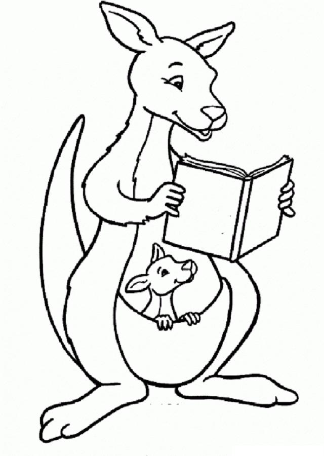 Dibujo Canguro Leyendo Un Libro Para Colorear Art Sketches Sketches Art