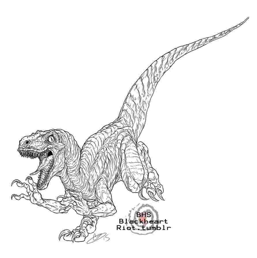 Jurassic World Blue Raptor Coloring Pages Dinosaur Art