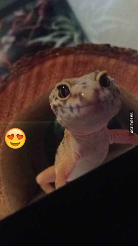 Meet my new Leopard Gecko. Rescued from Petco. Lil sweetheart is ...