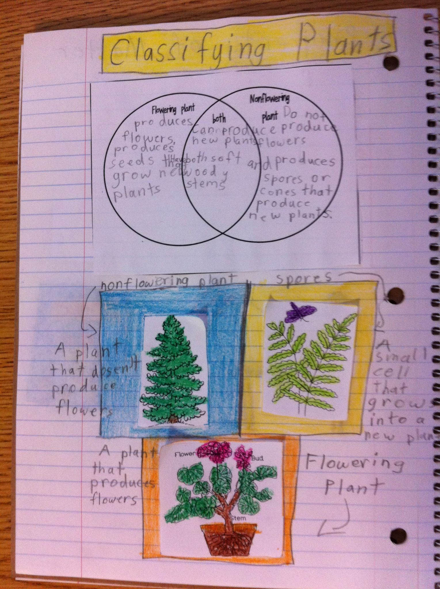 medium resolution of Classifying plants interactive science journal   Interactive science  notebook