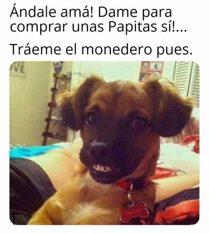 Pin De Sasha Godoy En Memes De Perritos Memes Divertidos Memes Comicos Memes De Animales Divertidos