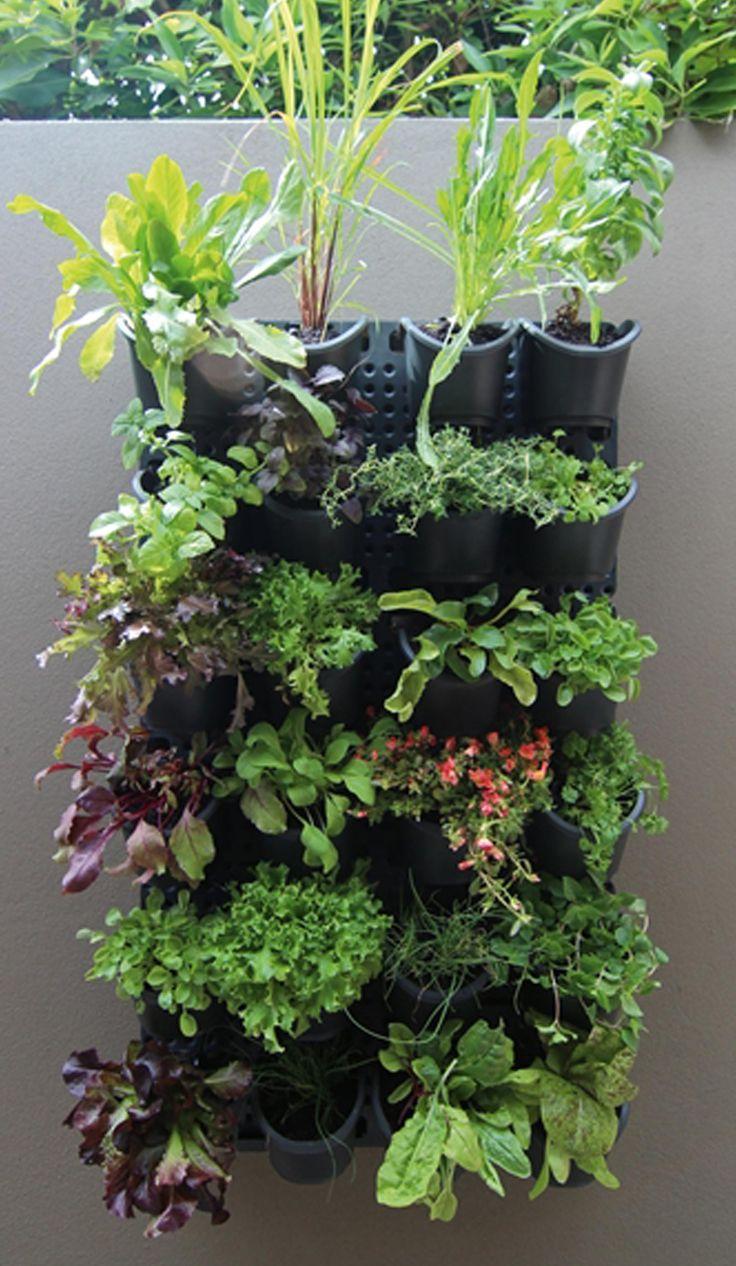 Holman Vertical GreenWall Garden Kit Vertical vegetable