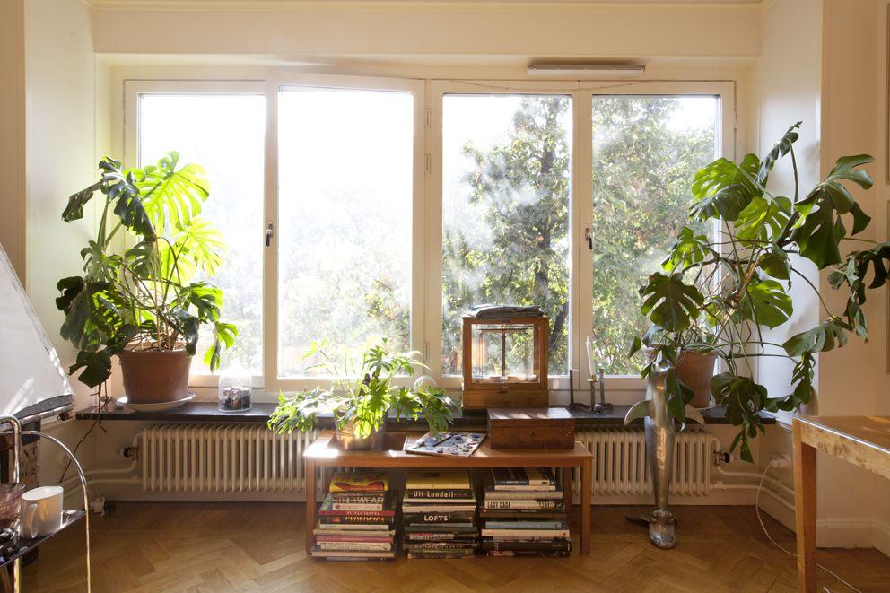 plants decoraci n sala pinterest wohnen daumen und fenster t ren. Black Bedroom Furniture Sets. Home Design Ideas