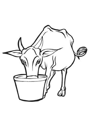 ausmalbild rind auf dem bauernhof   ausmalbilder tiere, ausmalen, ausmalbild kuh