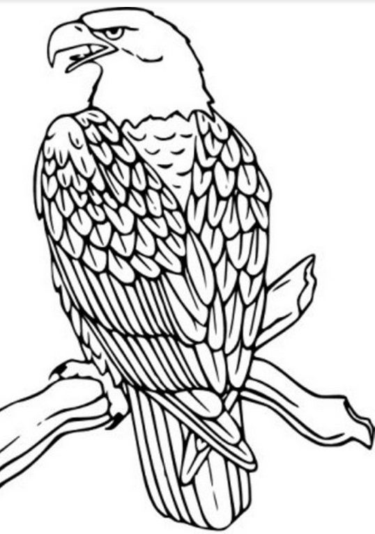 Pin By Kathy Naraghi On Delightful Digi S Bird Coloring Pages Eagle Drawing Animal Coloring Pages
