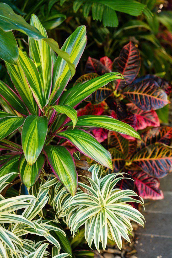 landsape ideas #simplegardenlandscapedesign | Tropical ...