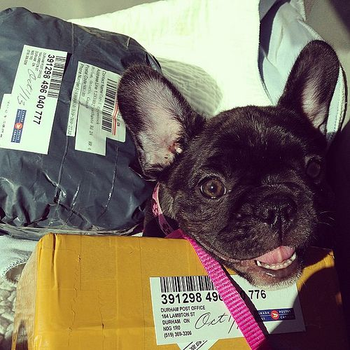 Emily helps collect the mail.  by bullmarketfrogs