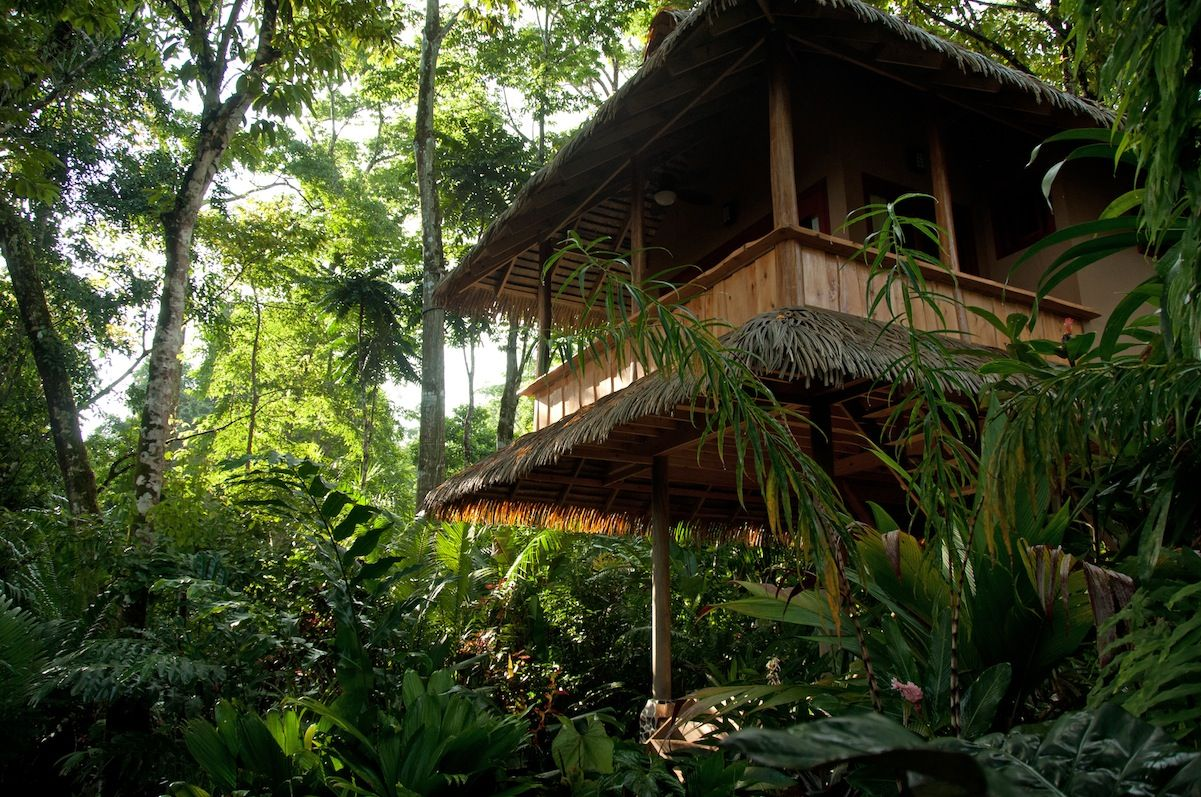 Exotic Costa Rica happens at Osa Peninsula. Copa de Arbol: find it here: http://www.wikoltravel.com/category/hotels-houses/corcovado/