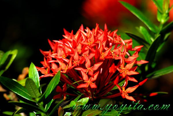 Caribbean Flowers: Tropical Flowers Go Green See