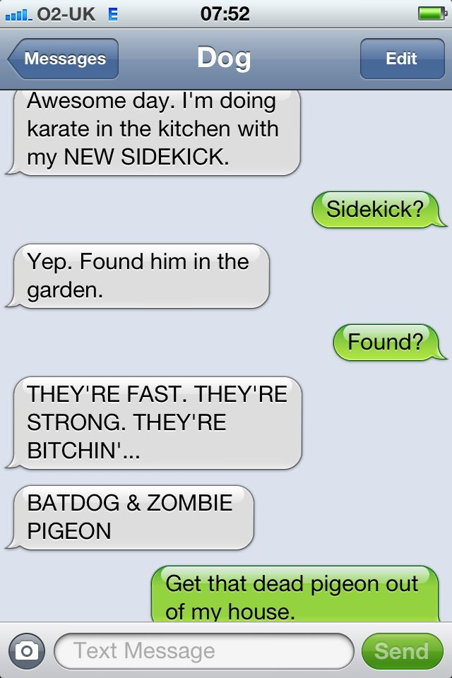 Zombie Pigeon Funny Dog Texts Funny Texts Funny Text Messages