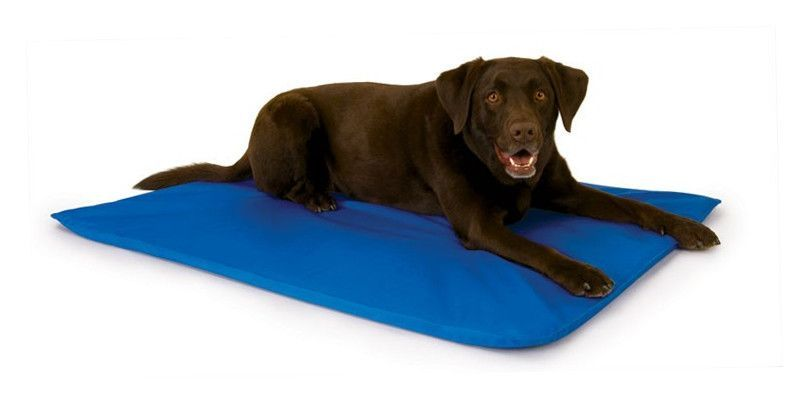 Cooling Dog Bed Iii By K H Pet Products Future Cool Dog Beds