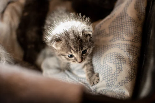 750 Cute Cat Pictures Download Free Images On Unsplash Cats Pets Cute Animals
