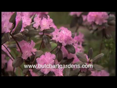Butchart Gardens Tour | Overnight Packages | Clipper Vacations