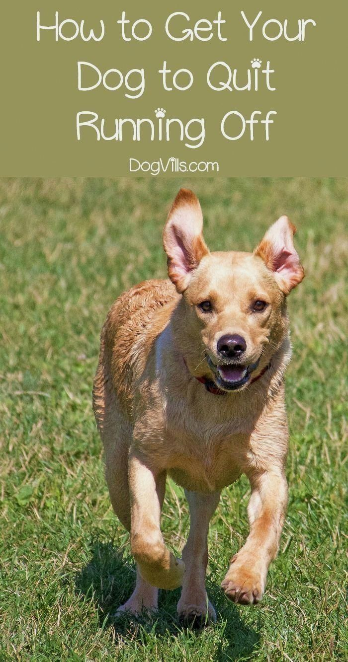 How to keep your dog from running off Dog training near
