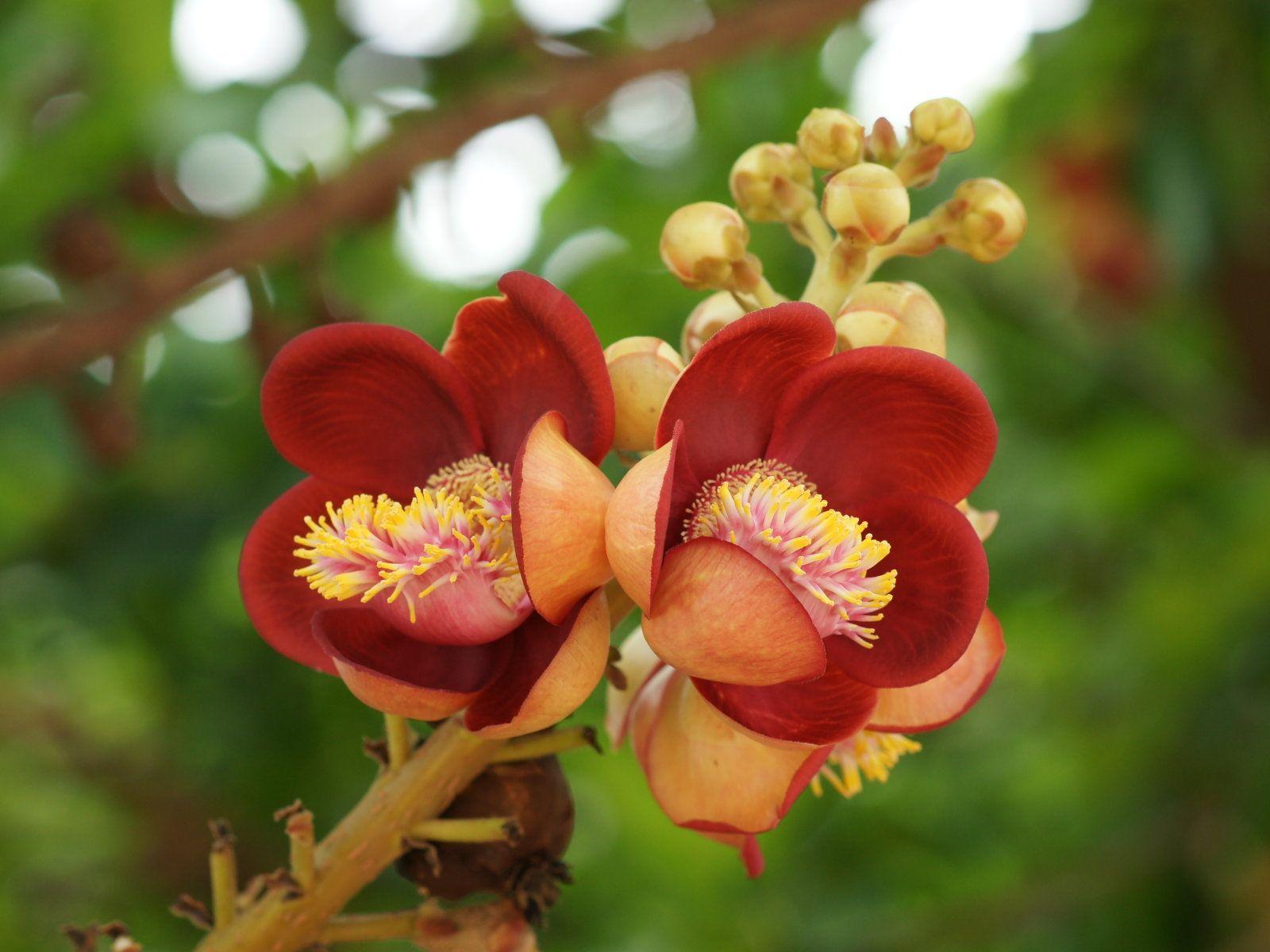 Exotic flowers beautiful exotic flowers wild flowers pinterest exotic flowers beautiful exotic flowers izmirmasajfo Images