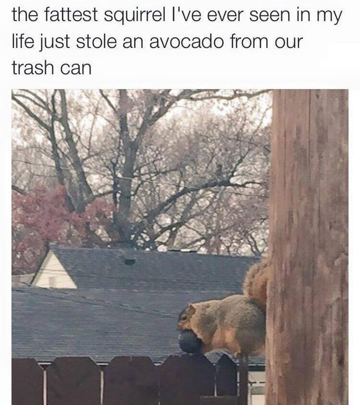 I relate to that squirrel