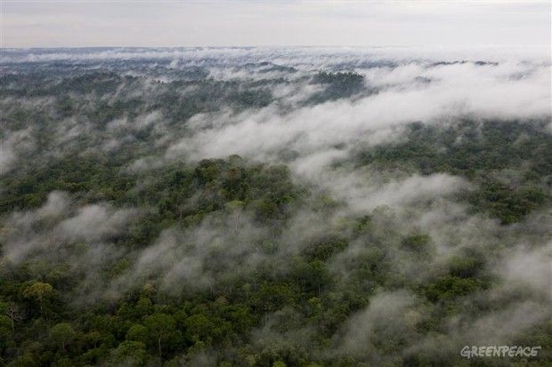 An untouched patch of the Amazon Rainforest, sadly something which is becoming rarer. Protect our ancient forests!