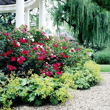 Easy Care Rose Garden Plan Garden Planning Gardens And Rose