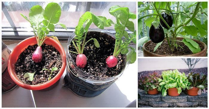 10 images about gardening on pinterest gardens container gardening and vegetables