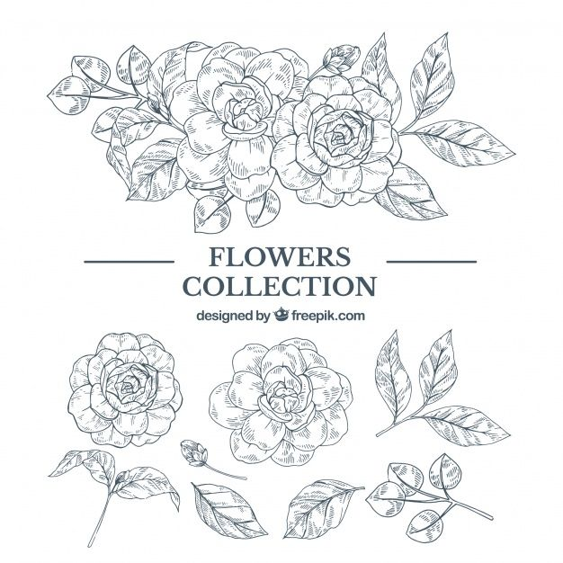 Download Elegant Hand Drawn Floral Element Collection for