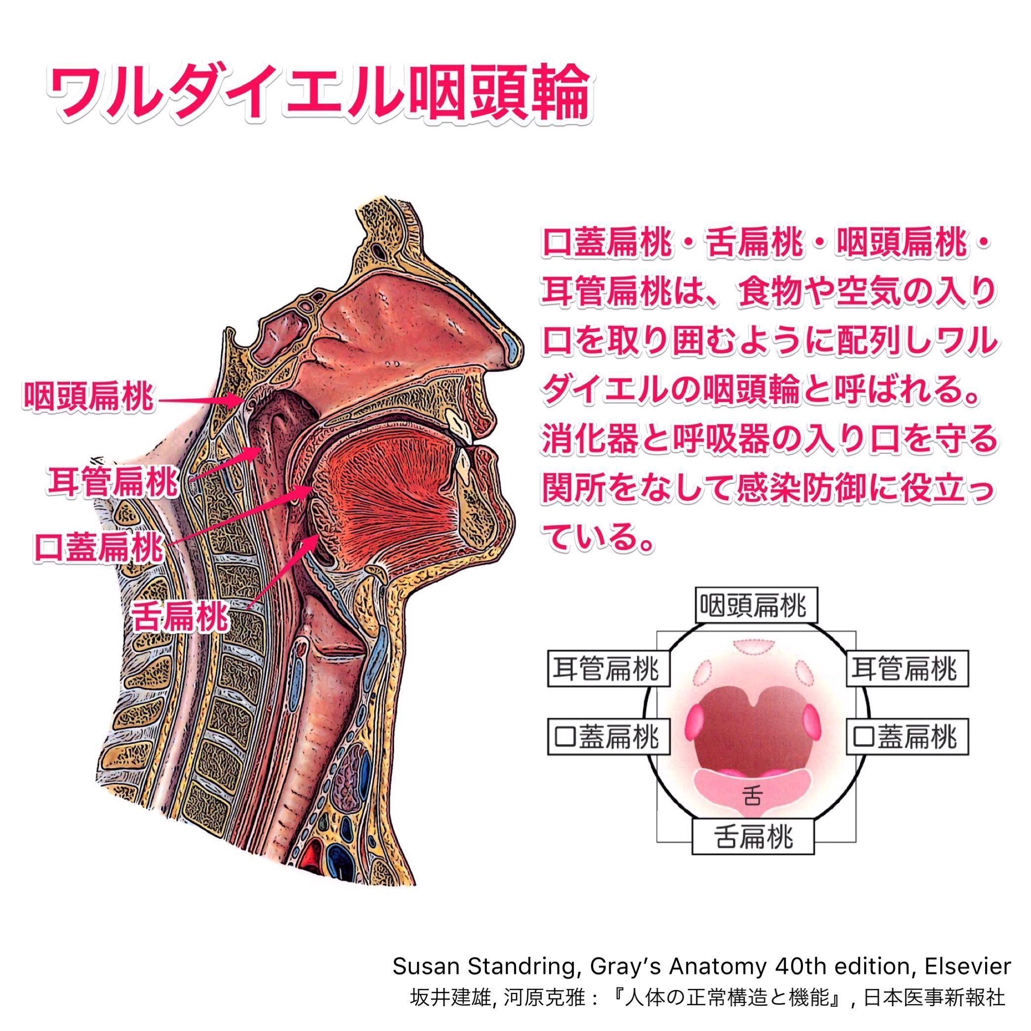 ボード 解剖学 のピン