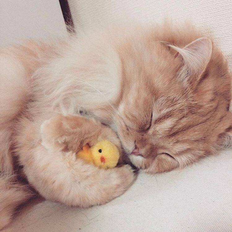 cute cats cat kittens kitty funny cutest kitten baby sleeping adorable animals gifts animal couples pets sleepy crazy smiles bring