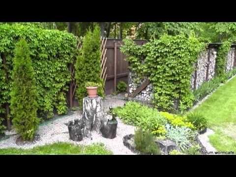 Девичий виноград в саду и на даче Виргинский виноград выращивание - YouTube