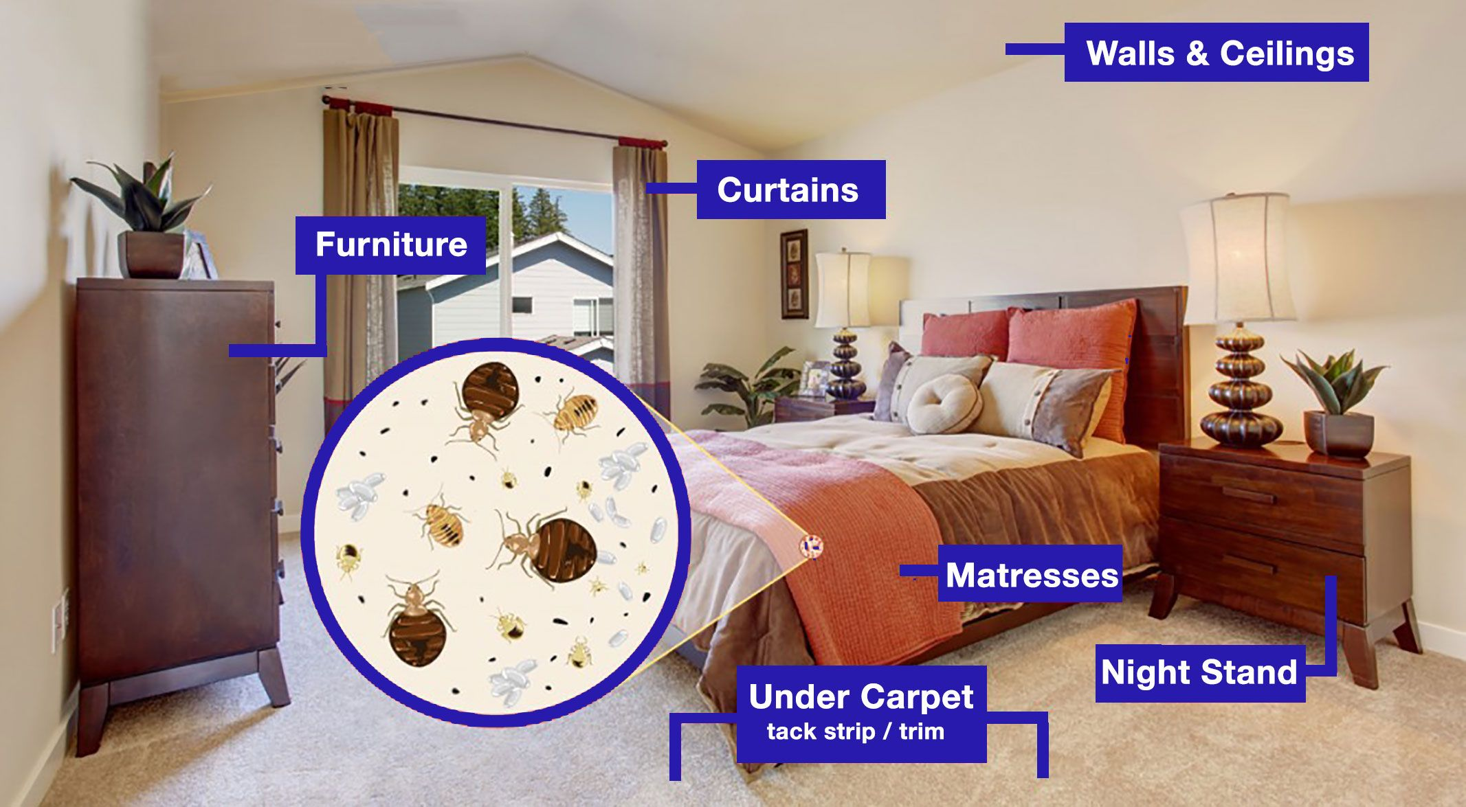 Check out our blog for the bed bug inspection steps when