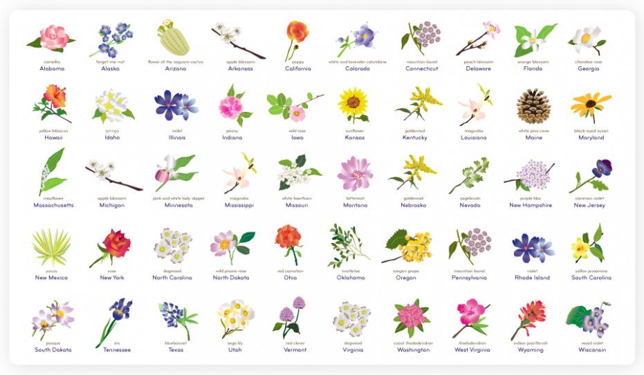 Five outrageous ideas for your new york state flower and