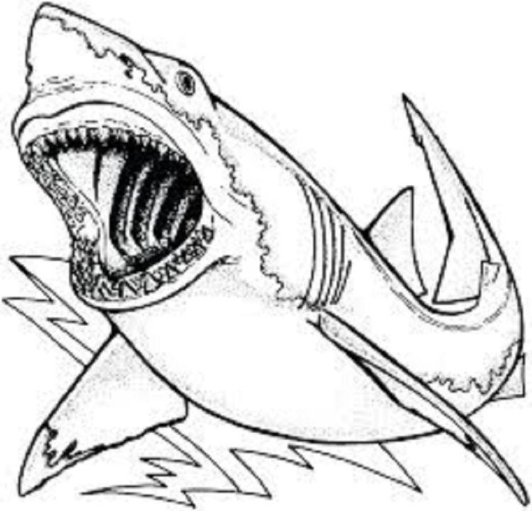 Shark Coloring Pages Pdf Shark Coloring Pages Animal Coloring Pages Coloring Pages