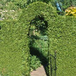 Haagplanten - Houtmeyers Plantencentrum - Boomkwekerij