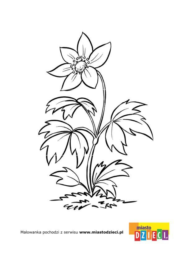 kwiaty kolorowanki dla dzieci