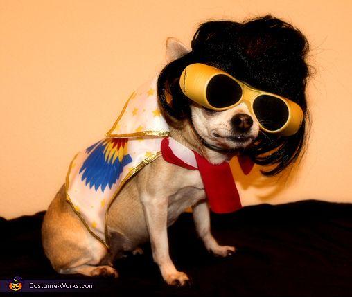 Elvis Halloween Costume Contest At Costume Works Com Dog