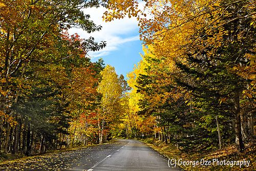 Autumn Scenic Drive, Mt Desert Island, Acadia National Park, Maine
